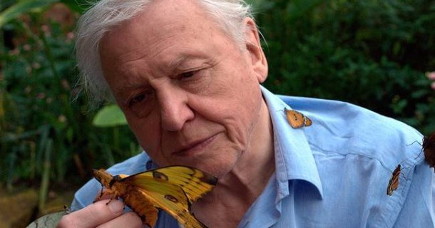 "David Attenborough i naturserien ""Livets uppkomst"" i SVT Play"