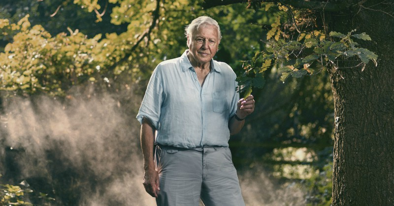 Attenborough och massutrotningen på SVT Play dokumentär streama